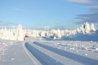 Langrenn skispor Hafjell vinter snø Lillehammer Gudbrandsdalen Oppland